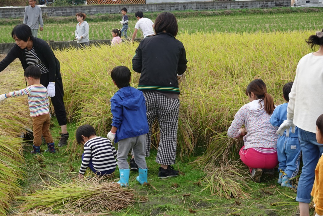米作り~稲刈り~_a0212624_14585768.jpg