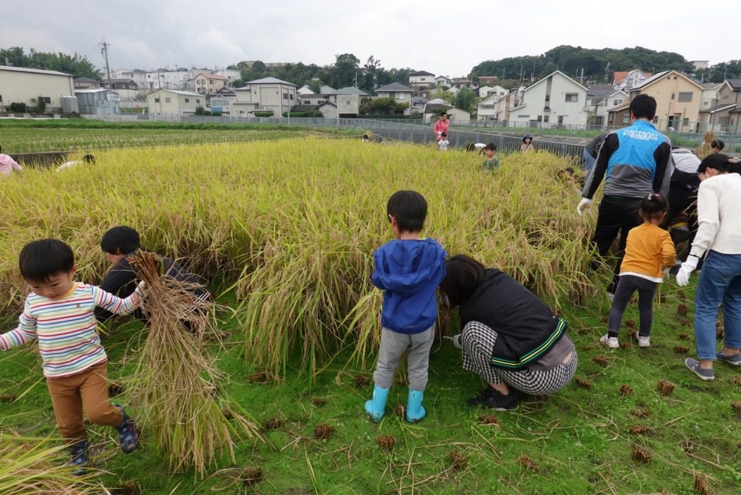 米作り~稲刈り~_a0212624_14585794.jpg