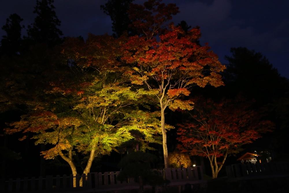 紅葉が見頃_c0111229_18553925.jpg
