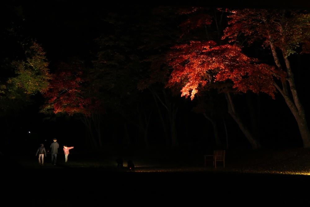 紅葉が見頃_c0111229_18554850.jpg