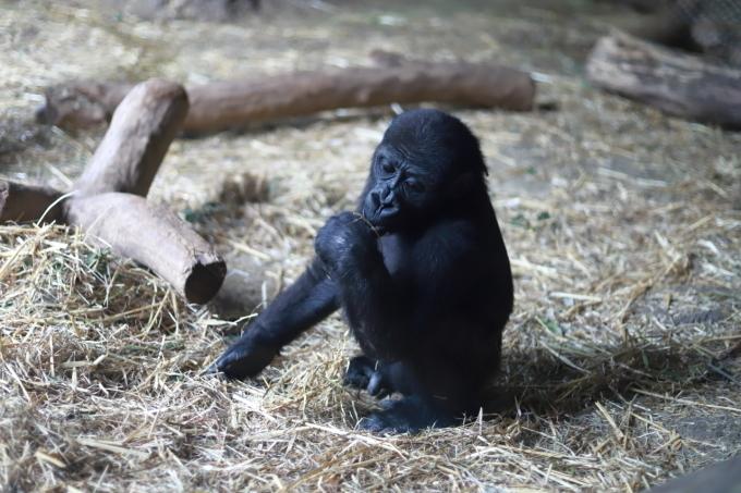 【上野動物園】part 2_f0348831_20170721.jpg