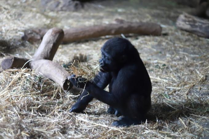 【上野動物園】part 2_f0348831_20170748.jpg