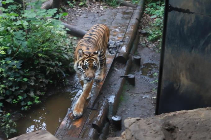【上野動物園】part 2_f0348831_20172411.jpg