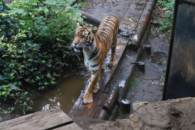【上野動物園】part 2_f0348831_20172599.jpg