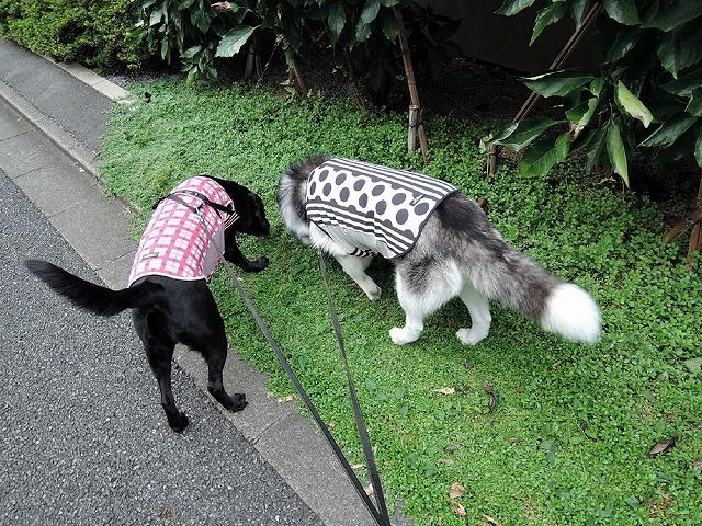 散歩屋日誌【20】_c0062832_14460798.jpg