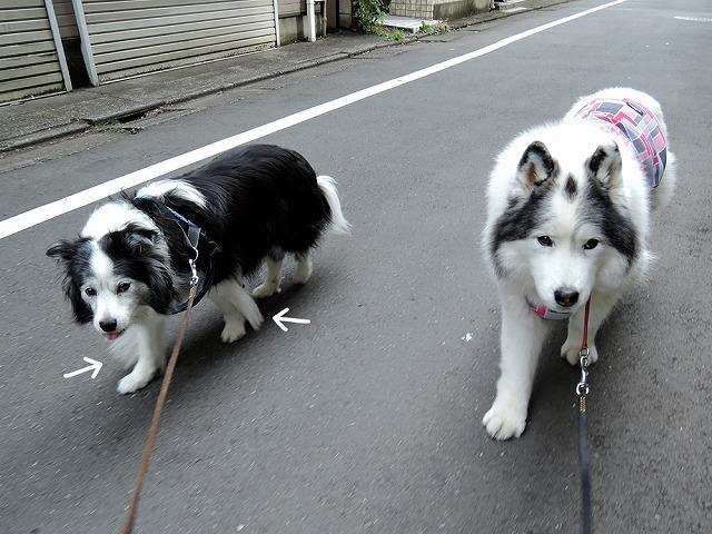 散歩屋日誌【20】_c0062832_14465289.jpg