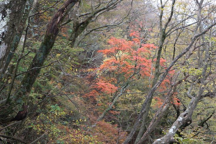 静かな山歩き(大障子岩&池の原展望所)_e0272335_524202.jpg