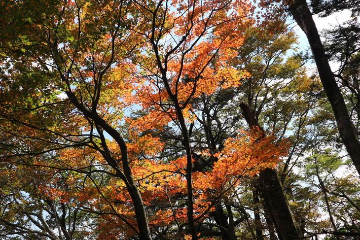 静かな山歩き(大障子岩&池の原展望所)_e0272335_5265118.jpg