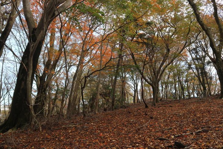 静かな山歩き(大障子岩&池の原展望所)_e0272335_5401021.jpg