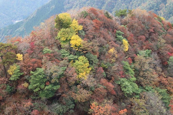 静かな山歩き(大障子岩&池の原展望所)_e0272335_57682.jpg