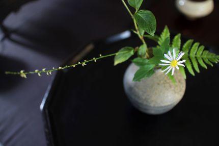 花だより 野菊_a0279848_12490062.jpg