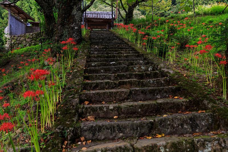 仏隆寺の彼岸花_f0155048_0361136.jpg