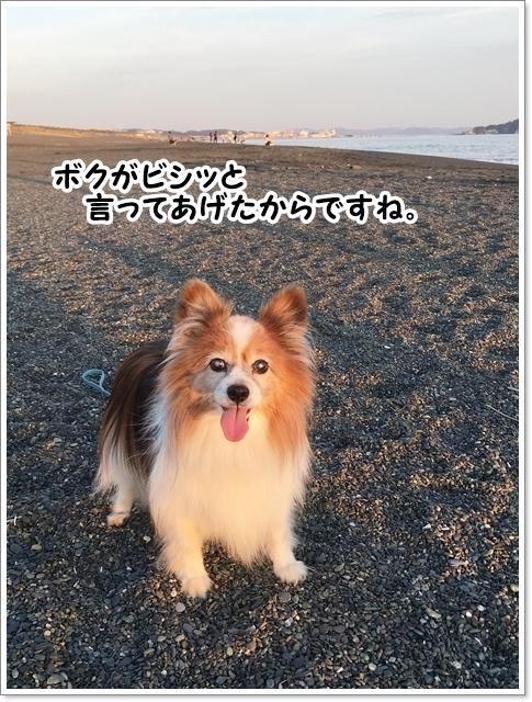 3ワン病院デー&海友さん_d0013149_23300418.jpg