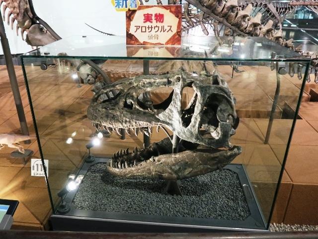 福井の旅 その1 (恐竜博物館)_e0017051_09422672.jpg