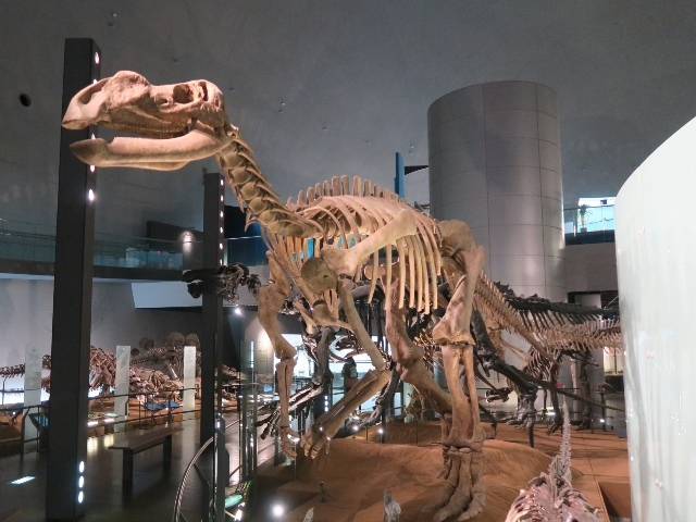 福井の旅 その1 (恐竜博物館)_e0017051_09422796.jpg