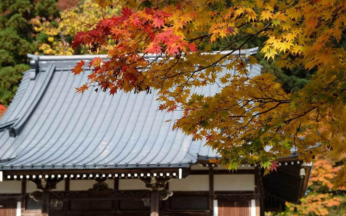 浄仙寺の秋2 2019_e0220159_17163925.jpg