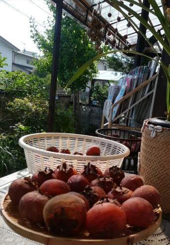 干し柿を作りました_a0111166_13372084.jpg