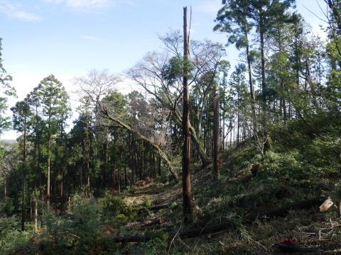 中折れスギの伐採に再チャレンジ10・26六国見山手入れ_c0014967_14084084.jpg