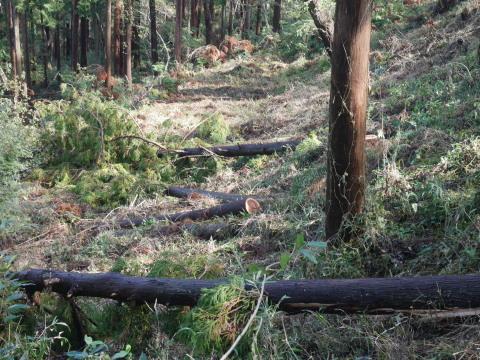 中折れスギの伐採に再チャレンジ10・26六国見山手入れ_c0014967_18074410.jpg