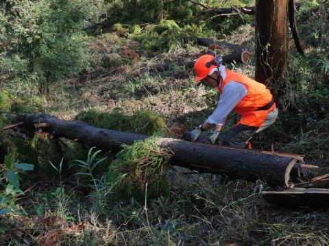 中折れスギの伐採に再チャレンジ10・26六国見山手入れ_c0014967_18082062.jpg