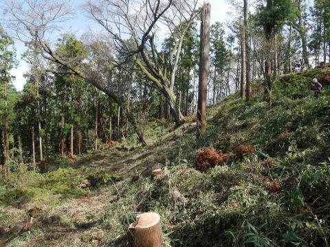 中折れスギの伐採に再チャレンジ10・26六国見山手入れ_c0014967_18092151.jpg