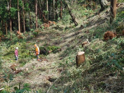 中折れスギの伐採に再チャレンジ10・26六国見山手入れ_c0014967_18100528.jpg