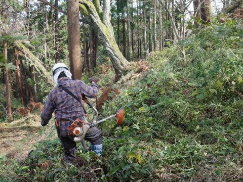 中折れスギの伐採に再チャレンジ10・26六国見山手入れ_c0014967_18132265.jpg