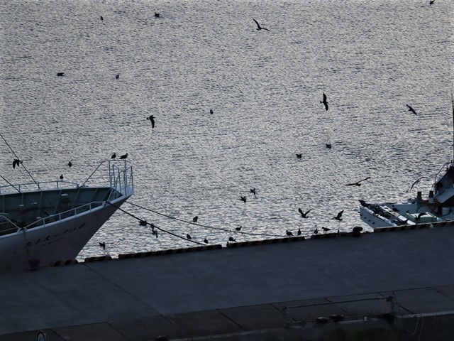 気仙沼の復興、美しい気仙沼の夜明け、復興に向かう気仙沼へ来てください。・・・気仙沼プラザホテル_d0181492_23142857.jpg