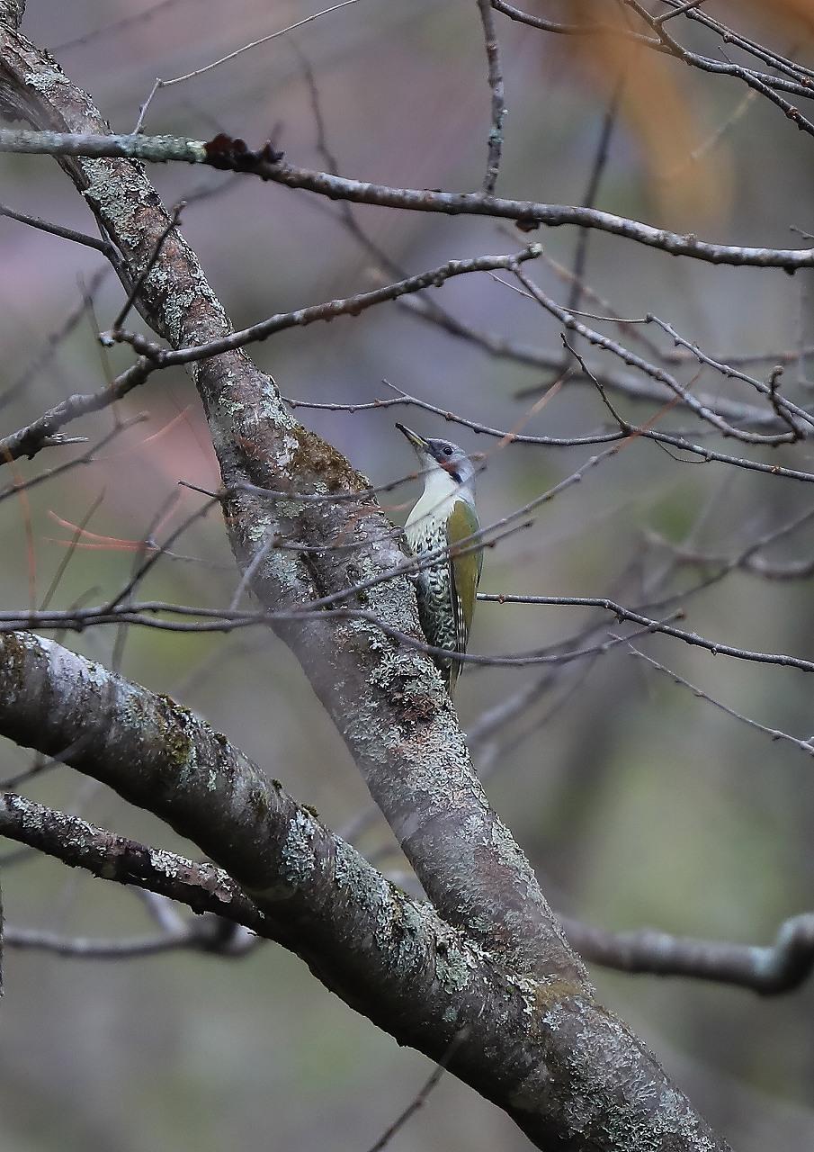 戸隠の野鳥_f0296999_14243124.jpg