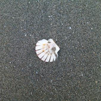 今朝は逗子海岸を走りました。_c0195909_16125632.jpg