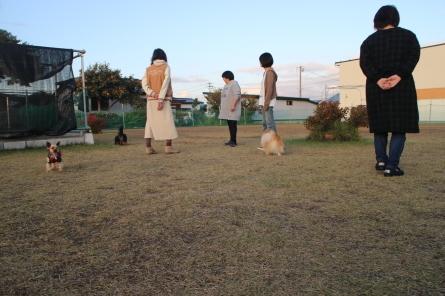 10月27日(日)ドッグラン大仙の様子と「らしく倶楽部」_f0170713_14021707.jpg