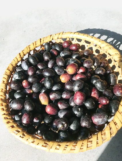 オリーブ収穫_b0134123_10082061.jpg