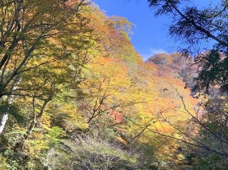 紅葉&黄葉最高潮!_f0101226_21304635.jpeg