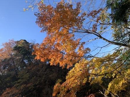 紅葉&黄葉最高潮!_f0101226_21315991.jpeg