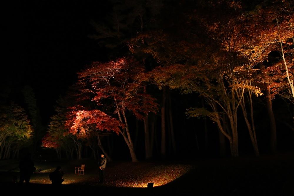 紅葉ライトアップ取材あり_c0111229_19504881.jpg