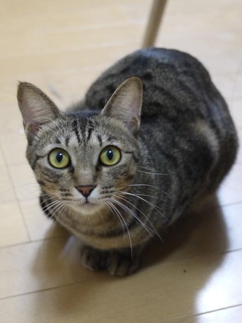 猫のお留守番 小松ちゃん編。_a0143140_18443201.jpg