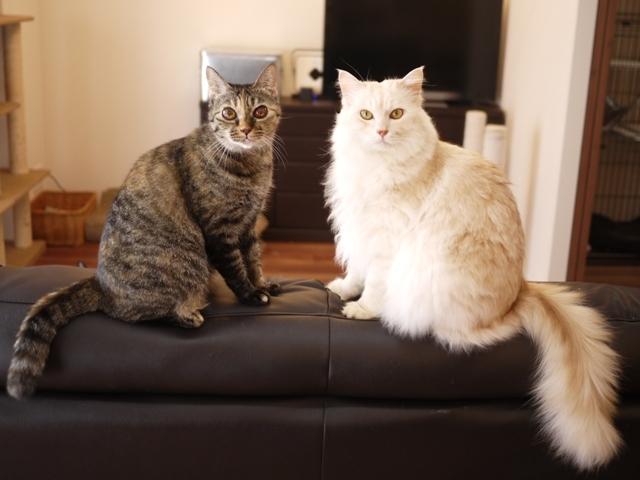 猫のお留守番 天ちゃん麦くん茶くん〇くんAoiちゃん編。_a0143140_18560799.jpg