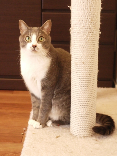 猫のお留守番 天ちゃん麦くん茶くん〇くんAoiちゃん編。_a0143140_18563870.jpg