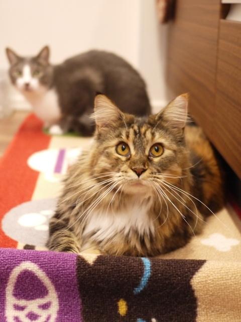 猫のお留守番 天ちゃん麦くん茶くん〇くんAoiちゃん編。_a0143140_18575102.jpg