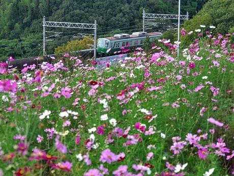 神戸総合運動公園 コスモスの丘_c0057946_20482281.jpg