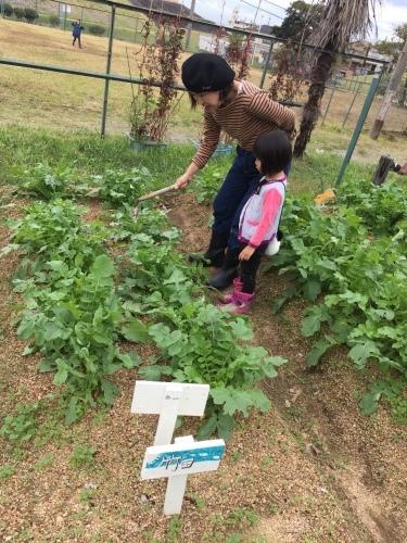 玉ねぎの苗の植え付けです_f0079749_10052382.jpg