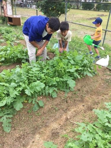 玉ねぎの苗の植え付けです_f0079749_10060919.jpg