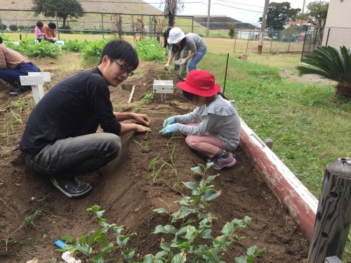 玉ねぎの苗の植え付けです_f0079749_10115895.jpg