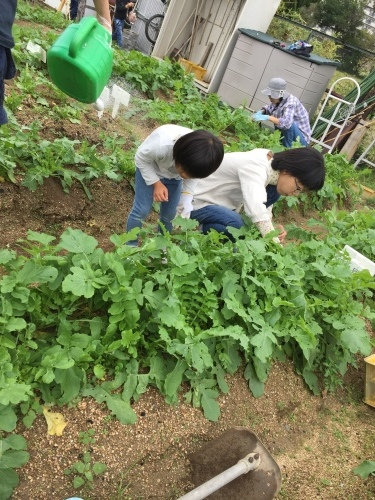 玉ねぎの苗の植え付けです_f0079749_10183090.jpg