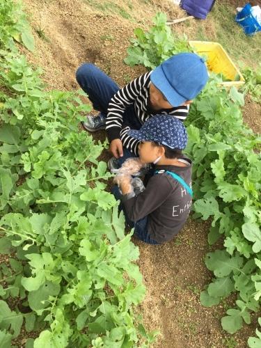 玉ねぎの苗の植え付けです_f0079749_10191059.jpg