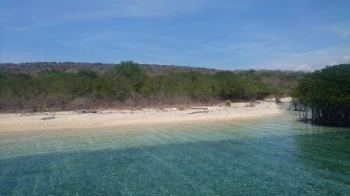 Menjangan bali island _d0156364_12543311.jpg