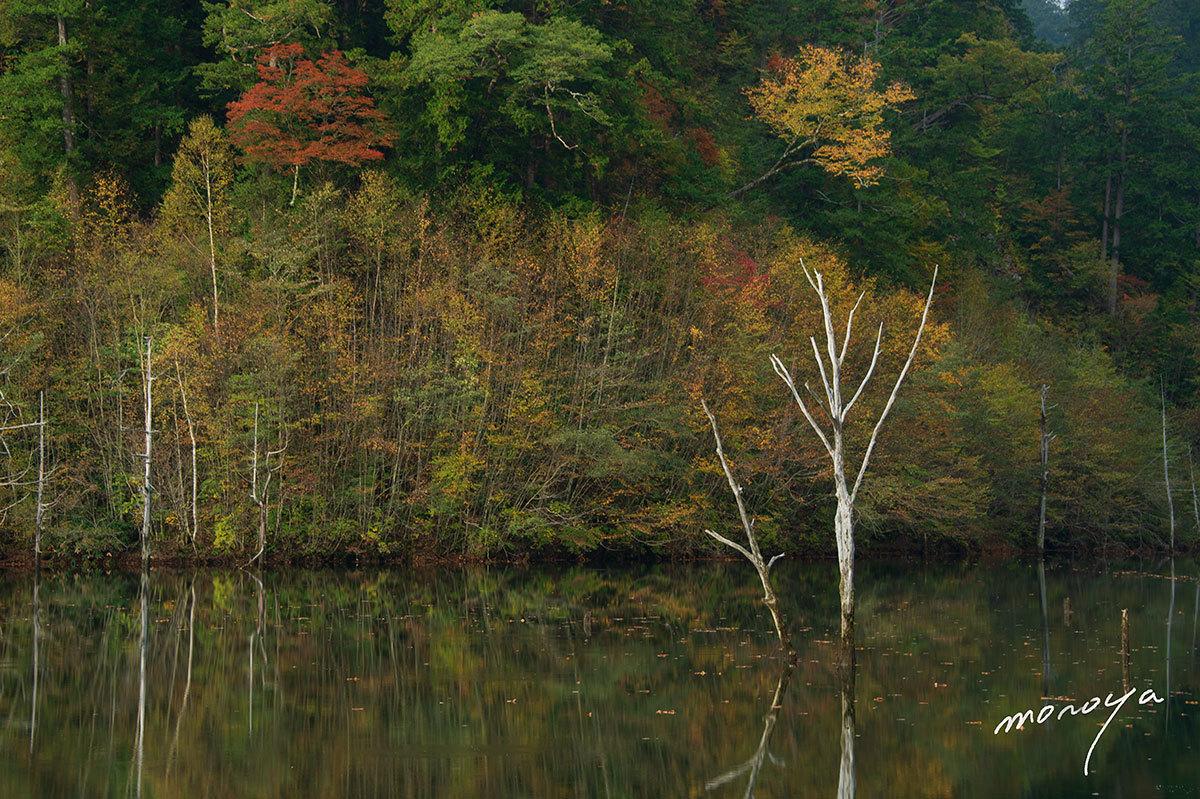 自然湖の秋_c0085877_07012664.jpg