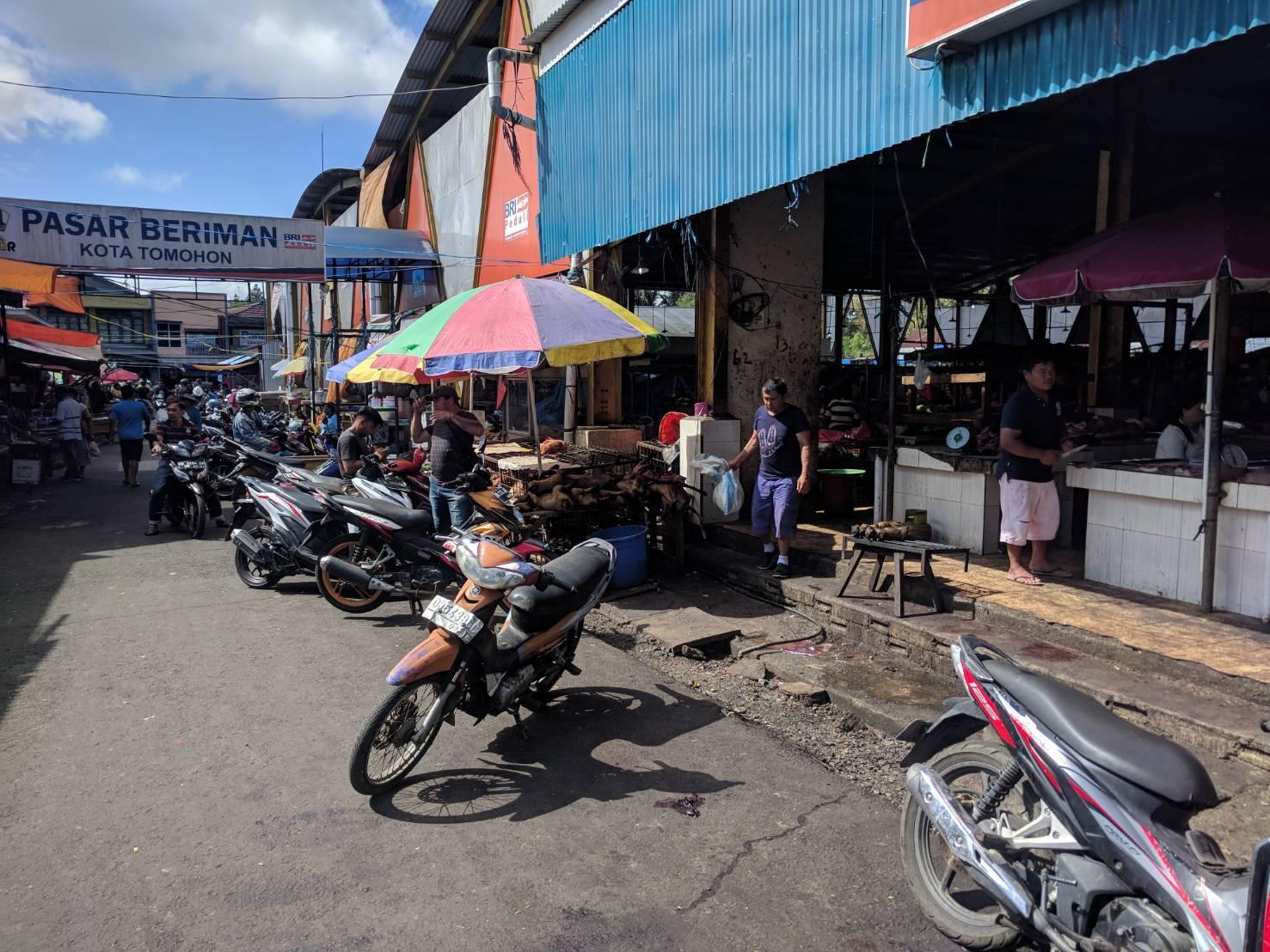 Manado Sulawesi採集紀行 その2_a0067578_17051458.jpg