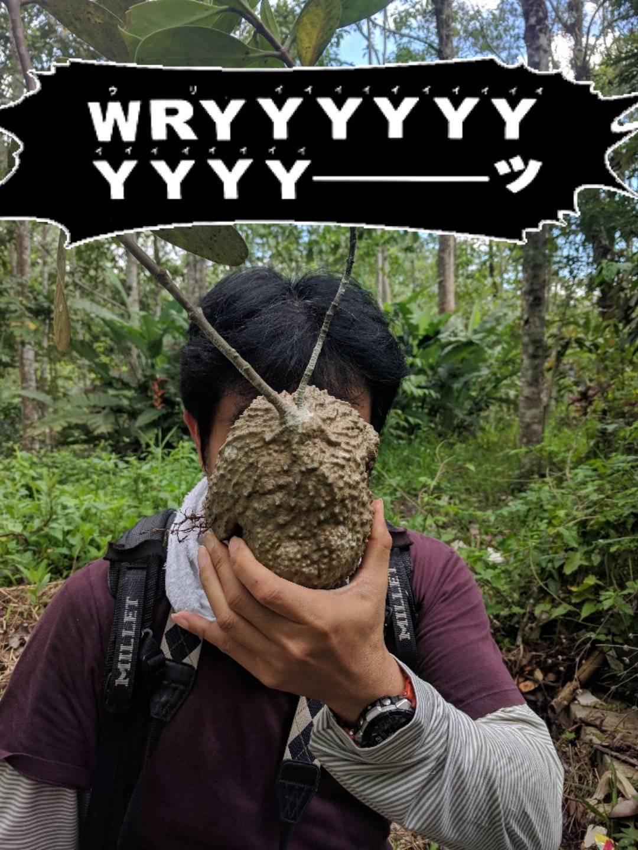 Manado Sulawesi採集紀行 その2_a0067578_17410362.jpg
