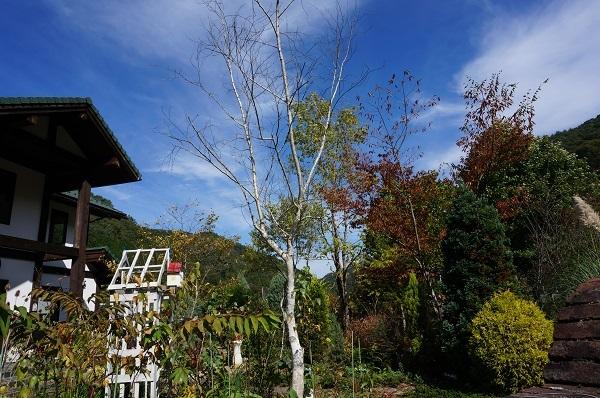今日のお庭_e0365880_20460022.jpg